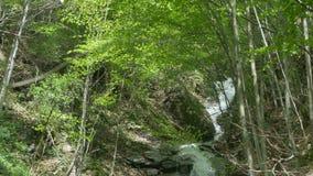 Tumultous瀑布在喀尔巴汗森林里 股票视频
