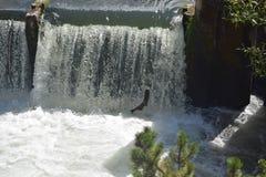 Tumwater понижается семги стоковое фото rf
