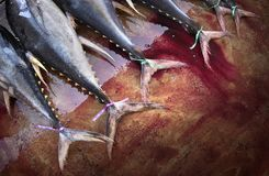 Tuna Tuna Tuna stock afbeelding