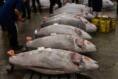 Tuna Auction no Tóquio do mercado de peixes de Tsukiji Foto de Stock
