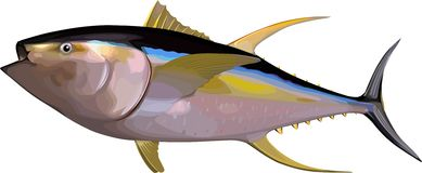 Tuna. Available in vector file format Royalty Free Stock Images