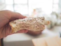 Tuna bread sandwich as breakfast. royalty free stock photo
