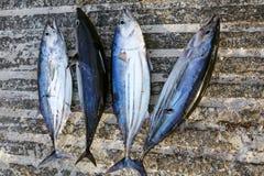 Tuna catch Stock Photos