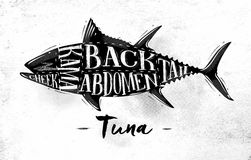 Tuna cutting scheme. Poster tuna cutting scheme lettering cheek, kama, abdomen, back, tail in vintage style drawing on dirty paper background Stock Photos
