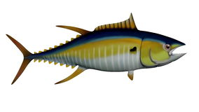 Tuna - 3D render Stock Images