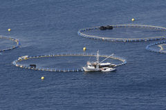 Tuna farming. Cages for tuna farming in Adriatic sea in Croatia Royalty Free Stock Photography