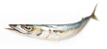 Tuna fish Royalty Free Stock Photography