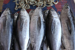 Tuna fish. Fresh tuna, at the fish market in Muscat, Oman Royalty Free Stock Photos