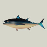 Tuna fish Stock Images