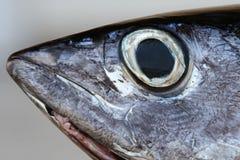 Tuna fish. A head of a tuna fish in a simple background Stock Image
