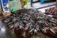 Tuna Fish au marché de pêche dans le port de Beruwala, Sri Lanka Photo libre de droits