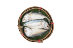 Tuna fish on basket. With white background Stock Images