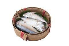 Tuna fish on basket. With white background Royalty Free Stock Image