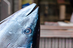 Tuna fish cutted head on a desk market in tokyo Royalty Free Stock Photo