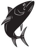 Tuna fish. The figure shows a tuna fish Stock Photos