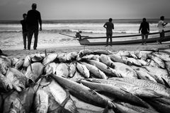 Tuna fish with fishermen at the Indian Ocean Stock Photo