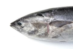 Tuna fish head Royalty Free Stock Image