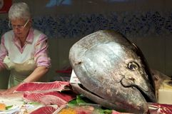 A tuna fish head at the market Stock Image