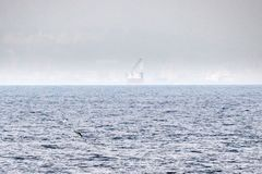 Tuna fish jumping outside the sea Royalty Free Stock Image