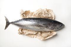 Tuna fish and paper stock photos