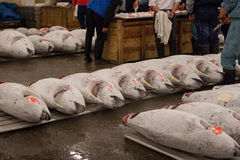 Tuna fish prepared for auction. Tuna fish auction at the Tsukiji fish market in Tokyo Royalty Free Stock Image
