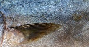 Tuna Fish Scales Closeup Royalty Free Stock Photo