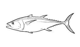 Tuna Fish Sketch Illustration Photos libres de droits