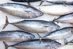 Tuna fish Stock Image