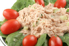 Tuna fish and spinach salad Royalty Free Stock Images