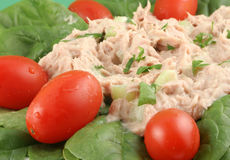 Tuna fish and spinach salad Stock Photography