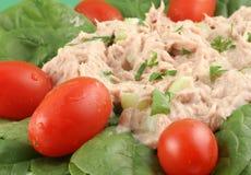 Tuna fish and spinach salad Stock Photography