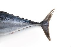 Tuna fish tail royalty free stock photo