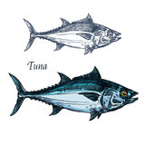 Tuna fish vector isolated sketch icon. Tuna fish vector sketch icon. Isolated sea or atlantic mackerel scombridae fish species. Isolated marine fauna symbol for Royalty Free Stock Image