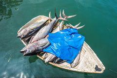 Tuna fresh fish in a small boat Royalty Free Stock Images
