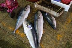 Tuna in Korean fish market. The yellow fin tuna fishes in Taiwan fish market Stock Photos