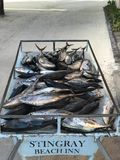 Tuna Royalty Free Stock Image