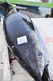 Tuna are marked with the name of the fisherman who caught them Stock Photo