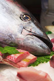 Tuna in Market Royalty Free Stock Image