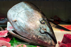 Tuna at the Market in Barcelona Stock Image