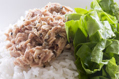 Tuna on Rice with Spinach Stock Photos