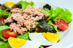 Tuna salad with eggs Stock Image