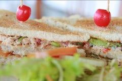 Tuna salad sandwich. Stock Photos