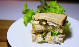 Tuna Salad Sandwiches arkivbilder