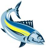 Tuna swimming Stock Photo