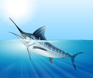 Tuna swimming in the sea Royalty Free Stock Photos