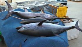 Tuna and swordfish in Crete Stock Photos