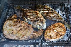 Sea breams, Tuna and Swordfish on the grill Stock Images