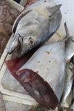 Tuna, tunny, thunfisch Stock Image