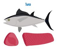 Tuna vector. Sea fish. Seafood. Vector illustration of tuna. Sea fish steak or fillet isolated on white Royalty Free Stock Images