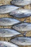 Tunafish at market Royalty Free Stock Image